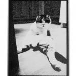 Sitting-Cat
